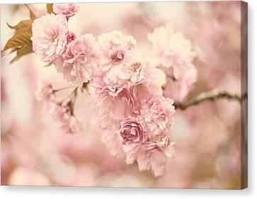 Cherry Blossom Petals Canvas Print by Jessica Jenney