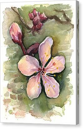 Cherry Blossom Watercolor Canvas Print by Olga Shvartsur