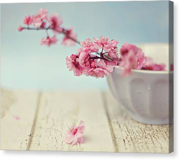 Cherry Blossoms In Bowl Canvas Print by Hayley Johnson Photography
