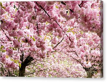 Cherry Blossoms In Milan Italy Canvas Print by Julia Hiebaum