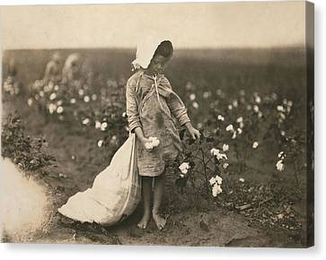 Child Labor, A Young Girl Picking Canvas Print by Everett