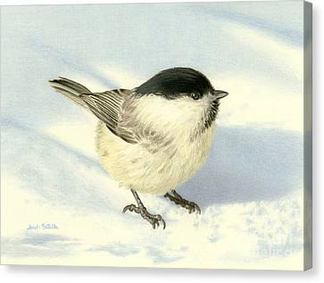 Chilly Chickadee Canvas Print by Sarah Batalka