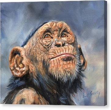 Chimp Canvas Print by David Stribbling