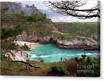 China Cove At Point Lobos Canvas Print by Charlene Mitchell
