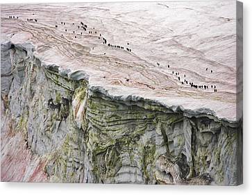 Chinstrap Penguins Crossing An Canvas Print by Maria Stenzel