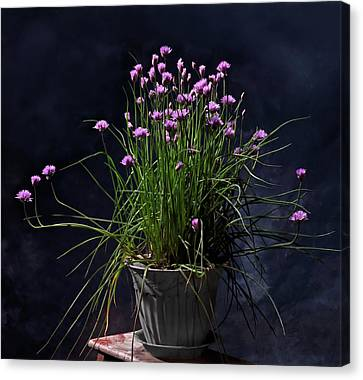 Chives Canvas Print by Don Spenner