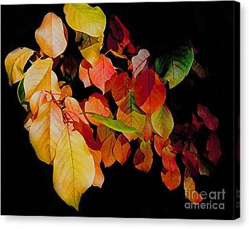 Chokecherry Leaves Canvas Print by Terril Heilman
