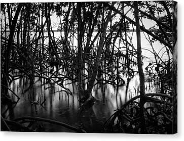 Chokoloskee Mangroves Canvas Print by Rich Leighton