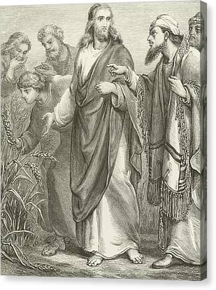 Christ And His Disciples In The Cornfields Canvas Print by English School