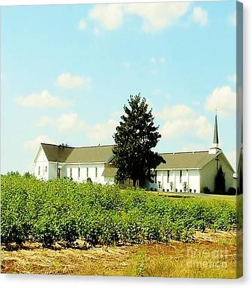 Church In The Cotton Fields Canvas Print by Eloise Schneider
