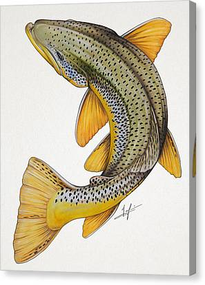 Circling Brown Trout Canvas Print by Nick Laferriere