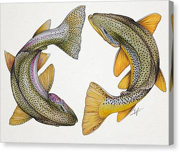 Circling Rainbow And Brown Trout Canvas Print by Nick Laferriere