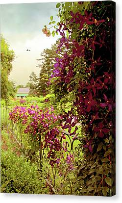 Climbing Clematis Canvas Print by Jessica Jenney