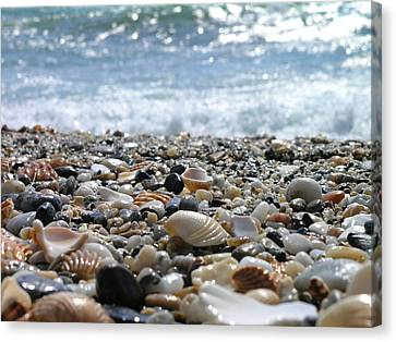 Close Up From A Beach Canvas Print by Romeo Reidl