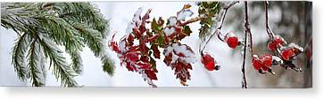 Close-up Of Frost On Plants Canvas Print by Panoramic Images