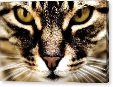 Close Up Shot Of A Cat Canvas Print by Fabrizio Troiani