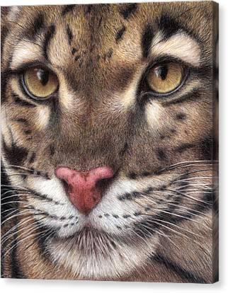 Clouded Leopard Canvas Print by Pat Erickson