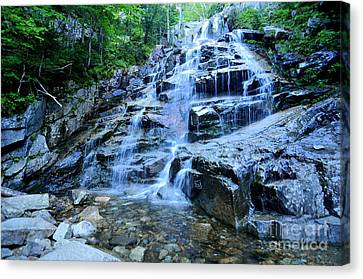 Cloudland Falls Canvas Print by Catherine Reusch  Daley