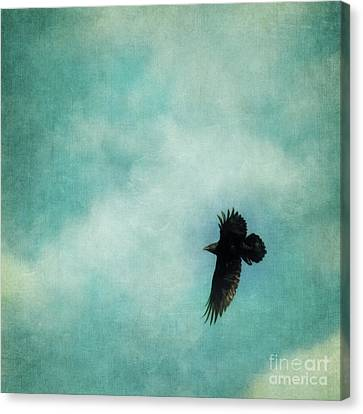 Cloudy Spring Sky With A Soaring Raven  Canvas Print by Priska Wettstein
