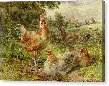 Cochin China Fowls Canvas Print by George Hickin