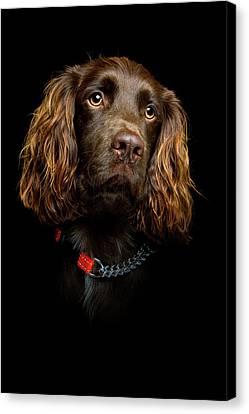 Cocker Spaniel Puppy Canvas Print by Andrew Davies