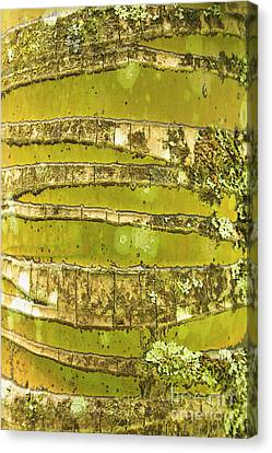 Coconut Palm Bark 1 Canvas Print by Brandon Tabiolo - Printscapes