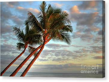 Coconut Palms Canvas Print by Kelly Wade