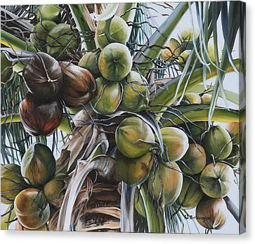 Coconut Profusion Canvas Print by Wendy Ballentyne