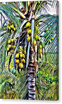 Coconut Tree Canvas Print by Carey Chen