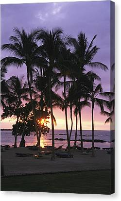 Coconut Trees Silhouetted On Mauna Lani Canvas Print by Richard Nowitz