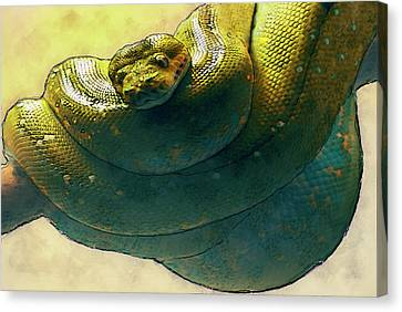 Coiled Canvas Print by Jack Zulli