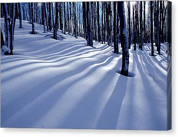 Collingwood Trees Canvas Print by Peter Bowers