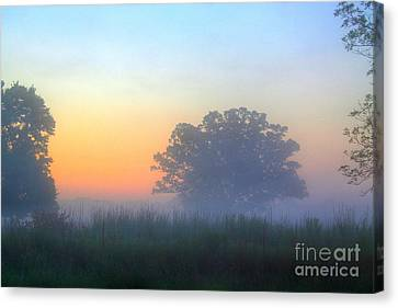 Color And Fog Canvas Print by Robert Pearson