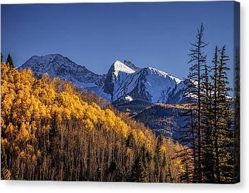Colorado Aspens At Autumn Canvas Print by Andrew Soundarajan