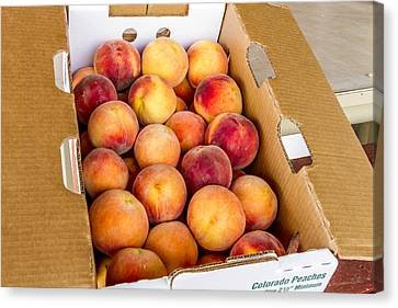 Colorado Peaches Ready For Market Canvas Print by Teri Virbickis
