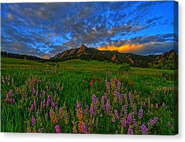 Colorado Wildflower Sunrise Canvas Print by Scott Mahon