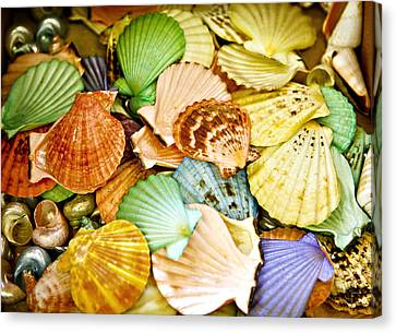 Colored Shells Canvas Print by Marilyn Hunt