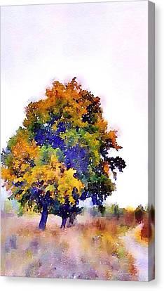 Colorful Autumn Canvas Print by Steve K