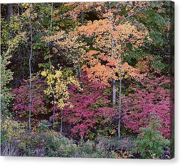 Colorful Fall Foliage Canvas Print by Rona Black