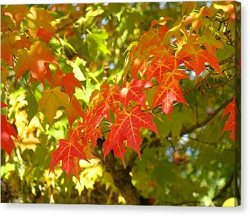 Colorful Fall Leaves Red Nature Landscape Baslee Troutman Canvas Print by Baslee Troutman