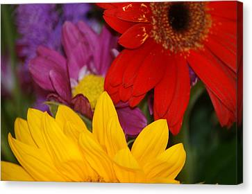 Colorful Flowers Canvas Print by Liz Vernand