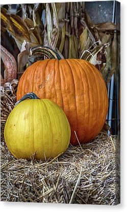 Colorful Pumpkins Canvas Print by John Haldane