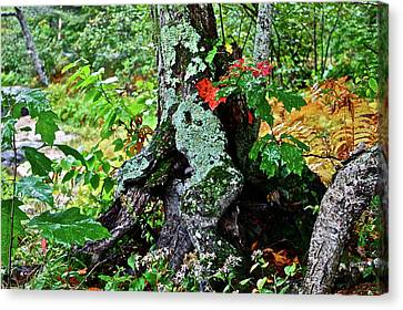Colorful Stump Canvas Print by Diana Hatcher