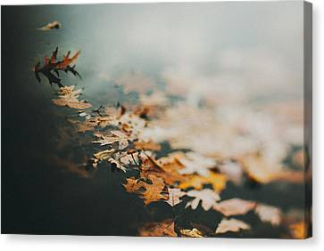 Colors Of Fall Canvas Print by Tracy  Jade