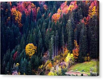 Colors Of Rhodope Canvas Print by Evgeni Dinev