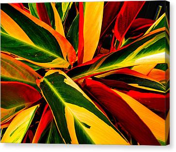 Colors Of Spring Canvas Print by Jerod Scheiferstein