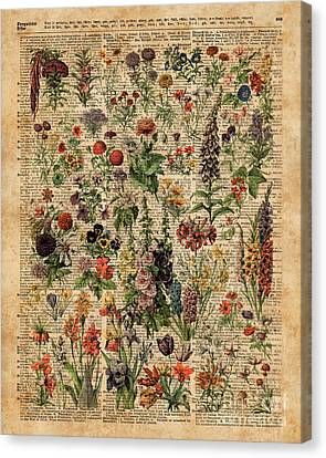 Colourful Meadow Flowers Over Vintage Dictionary Book Page  Canvas Print by Jacob Kuch