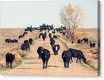 Coming Down The Road Canvas Print by Todd Klassy