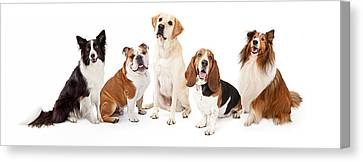 Common Family Dog Breeds Group Canvas Print by Susan  Schmitz