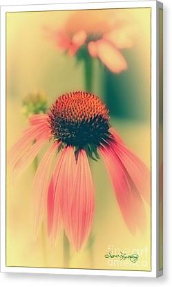 Coneflower Canvas Print by Susan  Lipschutz